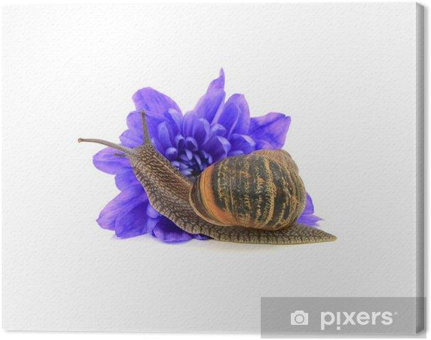 Tableau sur toile Ravageurs de jardin, l'escargot, mange un chrysanthème fleur bleue - Maisons et jardins
