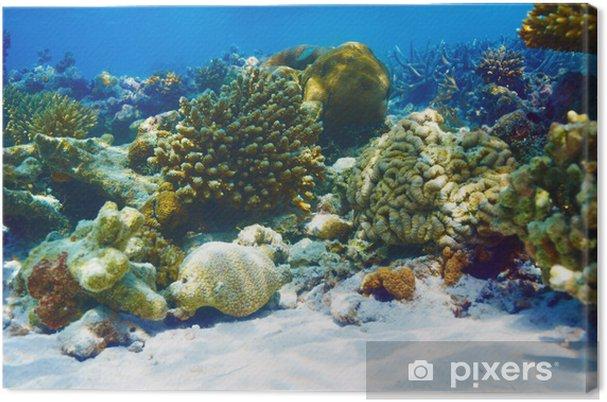 Tableau sur toile Récif de corail à Maldives - Récif de corail