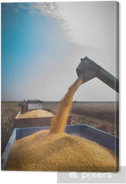 Tableau sur toile Récolte de maïs - Agriculture
