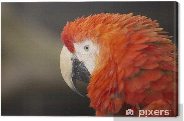 Tableau sur toile Red macaw - Thèmes