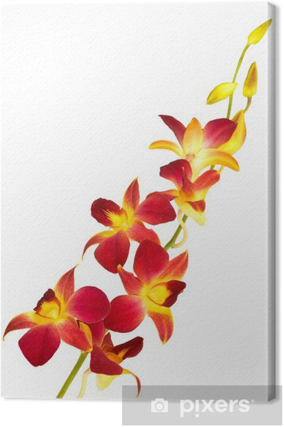 Tableau sur toile Red orchid - Sticker mural
