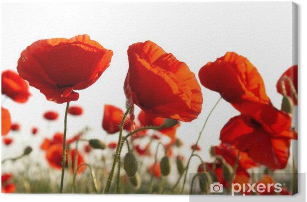 Tableau sur toile Red poppies - Thèmes