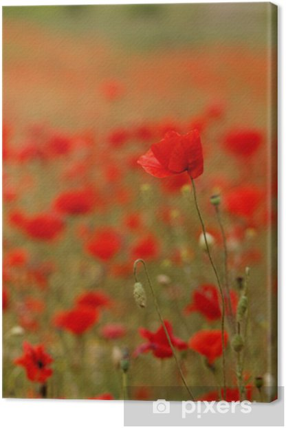Tableau sur toile Red poppies - Campagne