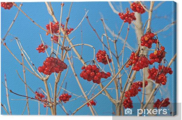 Tableau sur toile Red rowan - Fruits