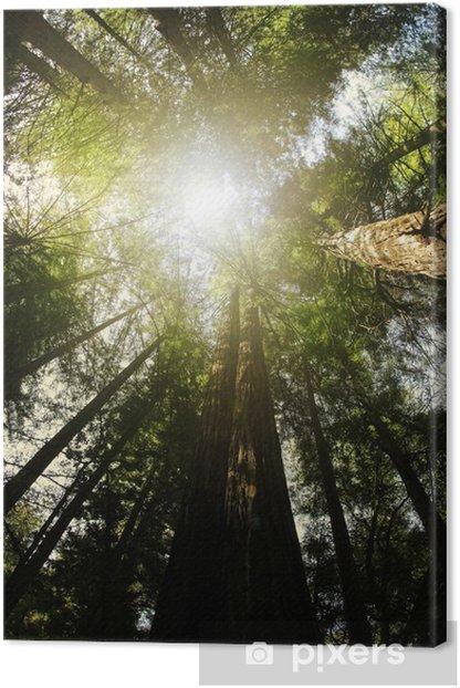 Tableau sur toile Redwood forêt - Amérique