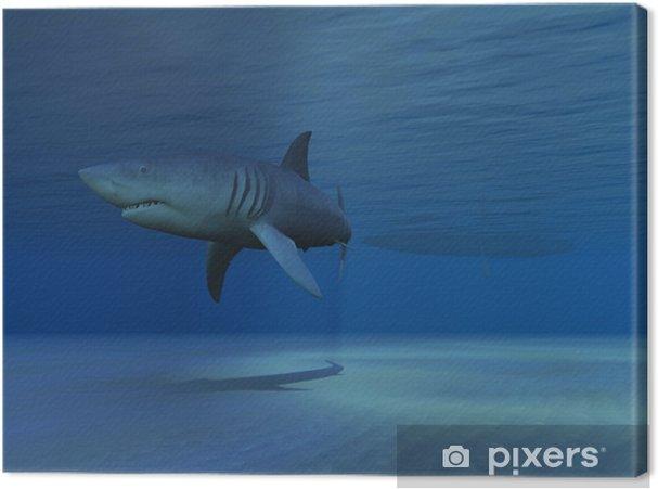 Tableau sur toile Requin - Animaux marins