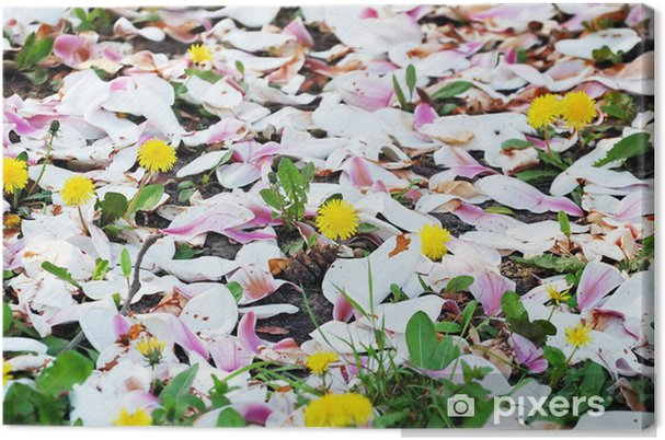 Tableau sur toile Rez de pissenlits en fleurs couvertes de pétales de magnolia - Saisons