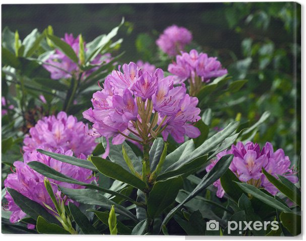Tableau rhododendron rose 2 tableaux sur toile rhododendron