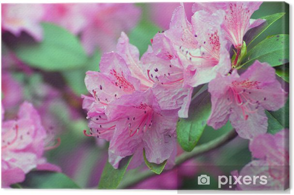 Tableau rhododendron rose 4 tableaux sur toile rhododendron