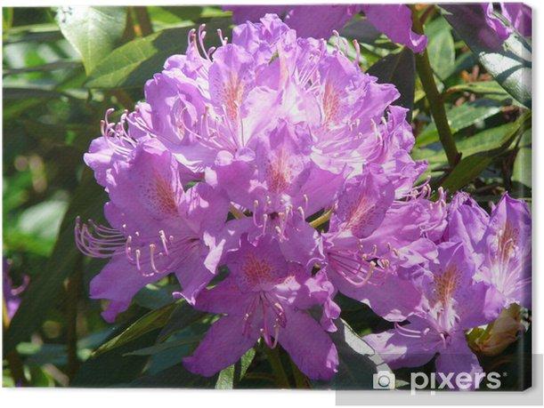 Tableau sur toile Rhododendron - Fleurs