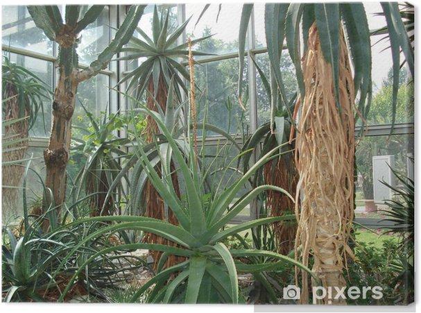 Tableau sur toile Riesenkakteen im Palmengarten Francfort - Plantes