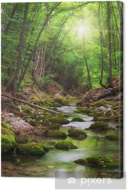 Tableau sur toile Rivière au fond de la forêt de montagne - Thèmes