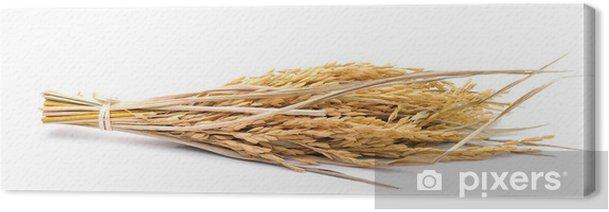 Tableau sur toile Riz au jasmin paddy sur fond blanc - Graines et céréales