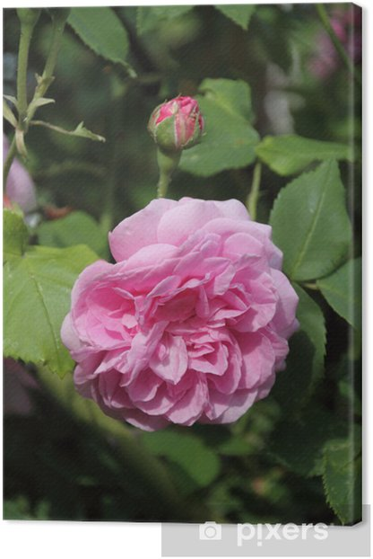 Tableau sur toile Rose Louise Ordier - Fleurs