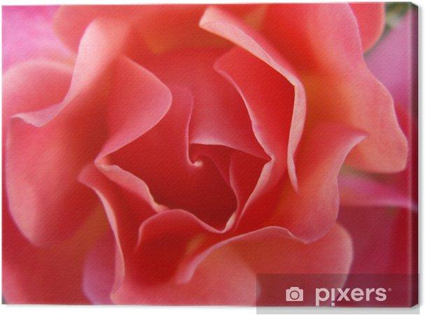 Tableau sur toile ROSE ROSA - Fleurs