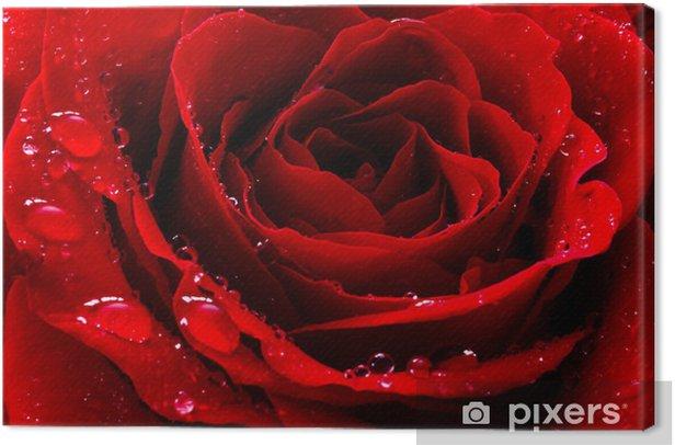 Tableau sur toile Rose rouge avec des gouttes d'eau. - Thèmes