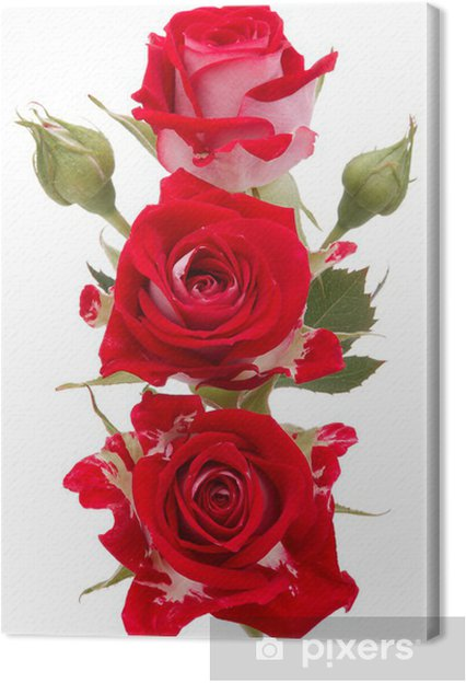 Tableau sur toile Rose rouge bouquet de fleurs isolé sur fond blanc découpe - Célébrations