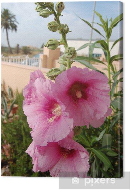Tableau sur toile Rose trémière - Fleurs