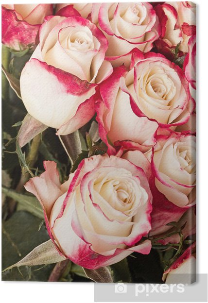 Tableau sur toile Roses roses - Célébrations