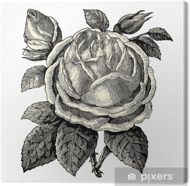 Tableau sur toile Rosier - Fleurs
