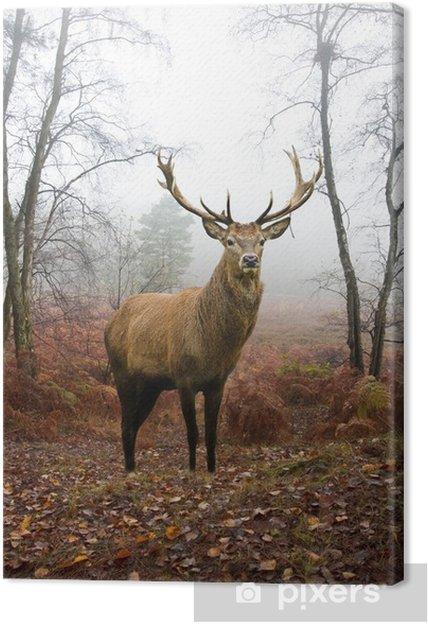 Tableau sur toile Rouge cerf chevreuil dans brumeux brumeux paysage de forêt d'automne à l'aube -