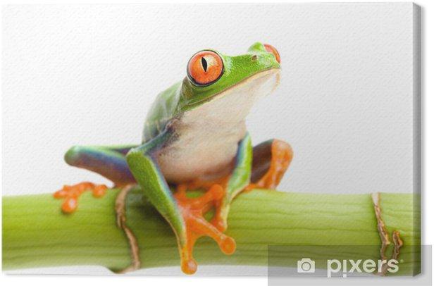 Tableau sur toile Rouge eyed tree frog sur le bambou - Grenouilles
