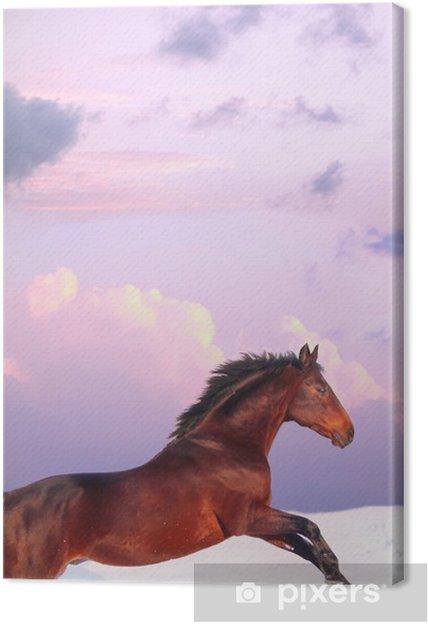 Tableau sur toile Running bay cheval dans le coucher du soleil à l'hiver - Mammifères