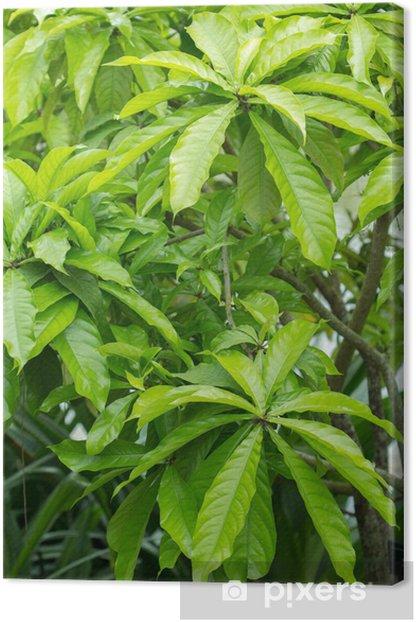 Tableau sur toile Sagaribana - Plantes