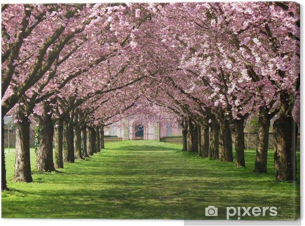 Tableau sur toile Sakura - Destin