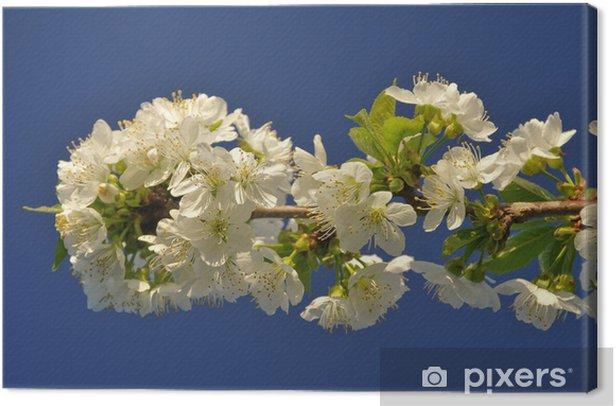 Tableau sur toile Sakura - Arbres