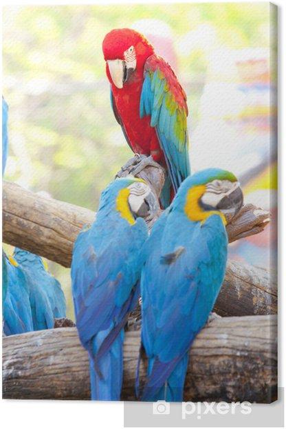 Tableau sur toile Scarlet aras - Perroquets