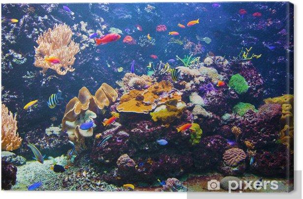 Tableau sur toile Scène sous-marine avec des poissons, des récifs coralliens - Récif de corail
