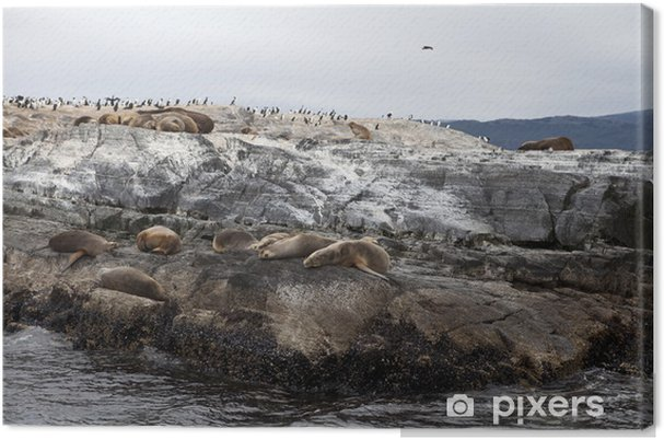 Tableau sur toile Sea Lions - Ecologie