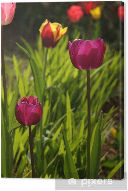 Tableau sur toile Sélection verticale des tulipes - Saisons