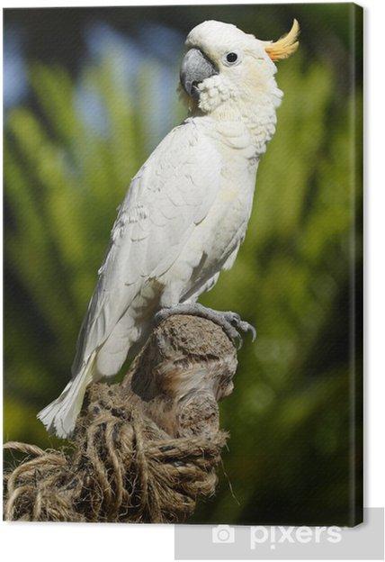 Tableau sur toile Série d'oiseaux tropicaux # 3 - Oiseaux