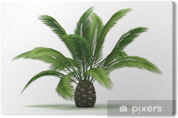 Tableau sur toile Seul palmier - Merveilles naturelles