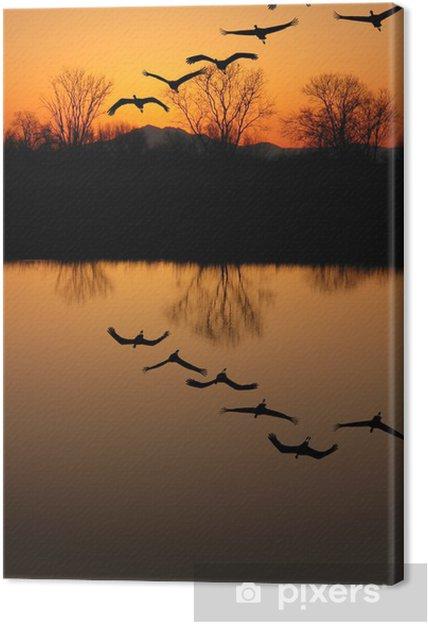 Tableau sur toile Silhouette d'espèces de grues, Reflet - Oiseaux