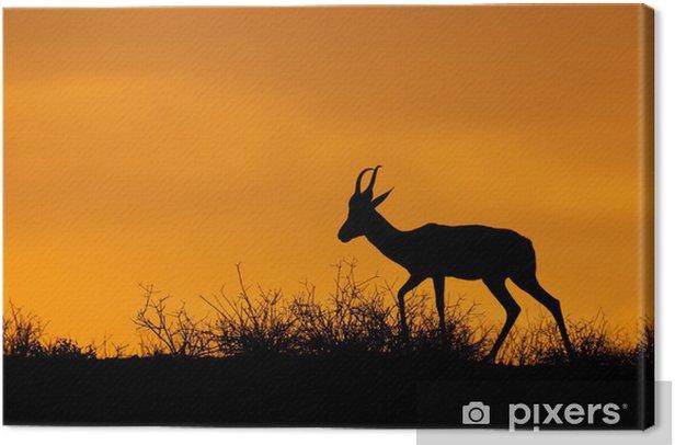 Tableau sur toile Silhouette Springbok, désert du Kalahari - Mammifères
