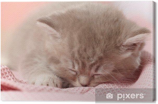 Tableau sur toile Sleeping kitten - Mammifères