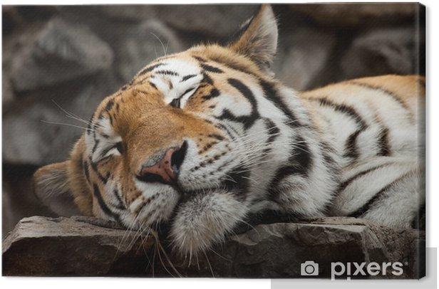 Tableau sur toile Sleeping tiger - Thèmes