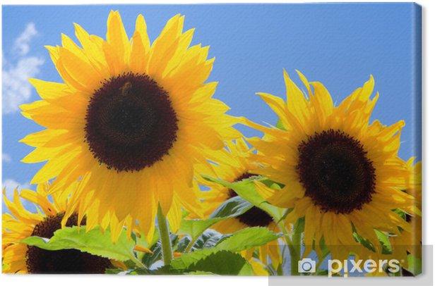 Tableau sur toile Sonnenblumen - Thèmes