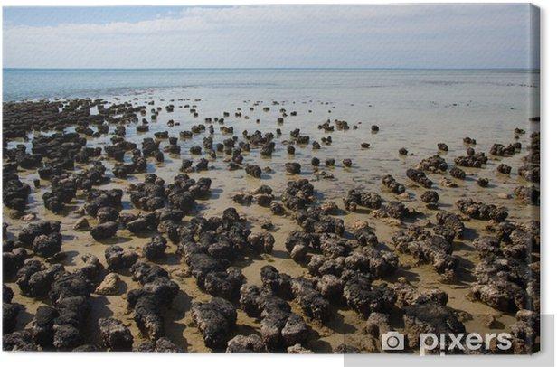 Tableau sur toile Stromatolites - Eau