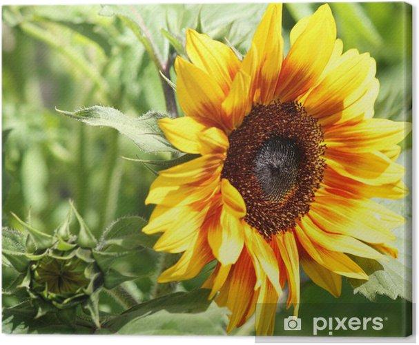 Tableau sur toile Sunflowerr - Fleurs