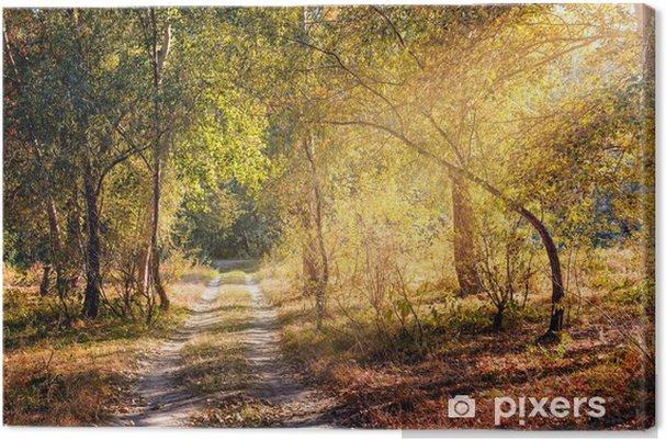 Tableau sur toile Sunray dans la forêt Automne - Forêt