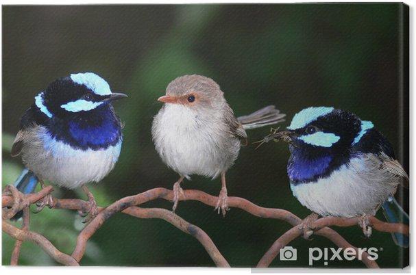 Tableau sur toile Superbes roitelets féeriques bleus perchés ensemble - Oiseaux