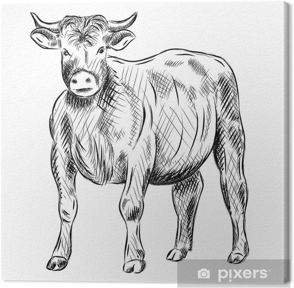Tableau sur toile Taureau - Mammifères