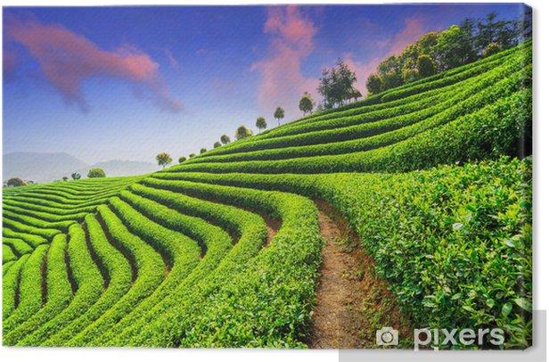 Tableau sur toile Tea Plantations under sky - Campagne