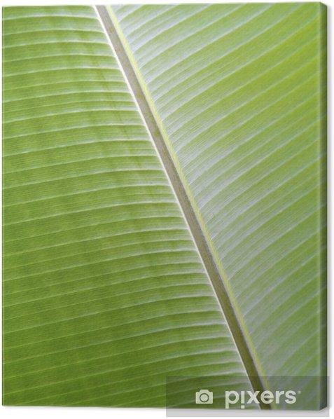 Tableau sur toile Texture de feuille de bananier - Maisons et jardins