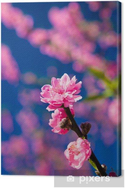 Tableau sur toile Thai Sakura fleurit dans la zone Northen en Thaïlande. - Fleurs