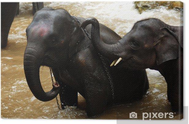 Tableau sur toile Thaïlande, Chiang Mai: baignade des éléphants - Asie
